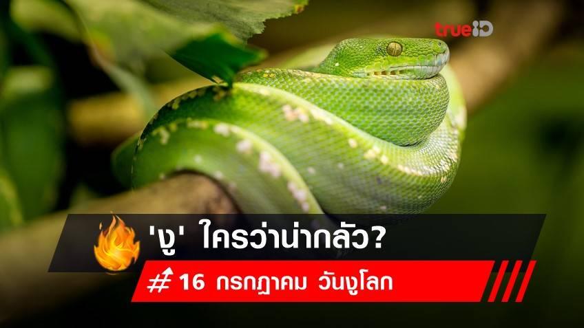 16 กรกฎาคม วันงูโลก :  อย่ามองว่าฉันร้ายกาจ... 'งู'  ใครว่าน่ากลัว?