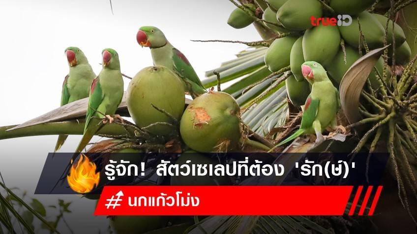 รู้จัก! 'นกแก้วโม่ง' สัตว์เซเลปที่ต้อง 'รัก(ษ์)' ฝูงสุดท้ายของไทย