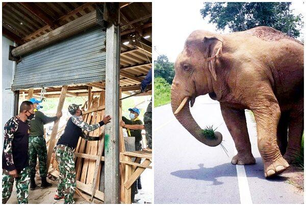 อุทยานแก่งกระจาน เร่งซ่อมบ้านแม่ค้ากล้วยทอด หลังช้างป่าบุกพังยับ