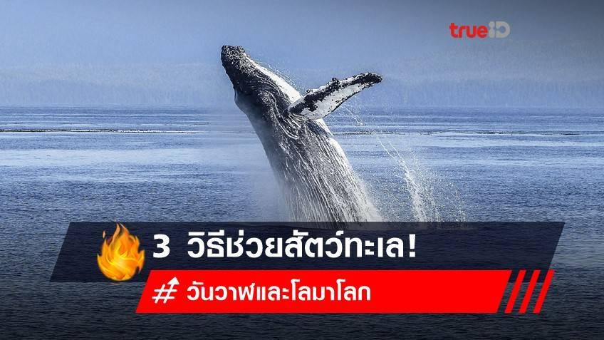 23 กรกฎาคม 2564 วันวาฬและโลมาโลก : 3 วิธีช่วยสัตว์ทะเล ทำได้เลย!