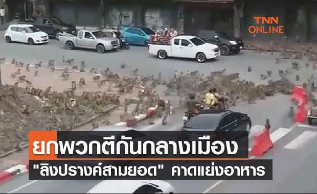 ลิงลพบุรียกพวกตีกันกลางเมือง-คาดแย่งอาหาร