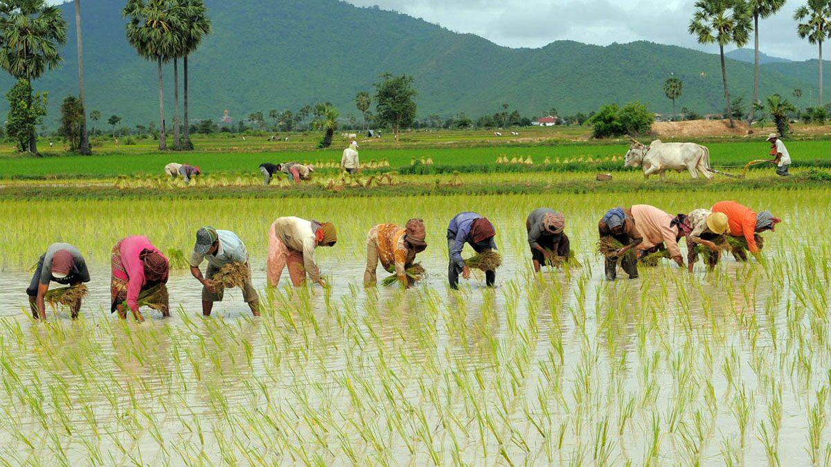 เกษตรกรได้เฮ! รัฐบาลบรรเทาทุกข์ช่วงโควิด จัดครบชุด สินเชื่อ-พักหนี้-ไกล่เกลี่ยถูกยึดทรัพย์