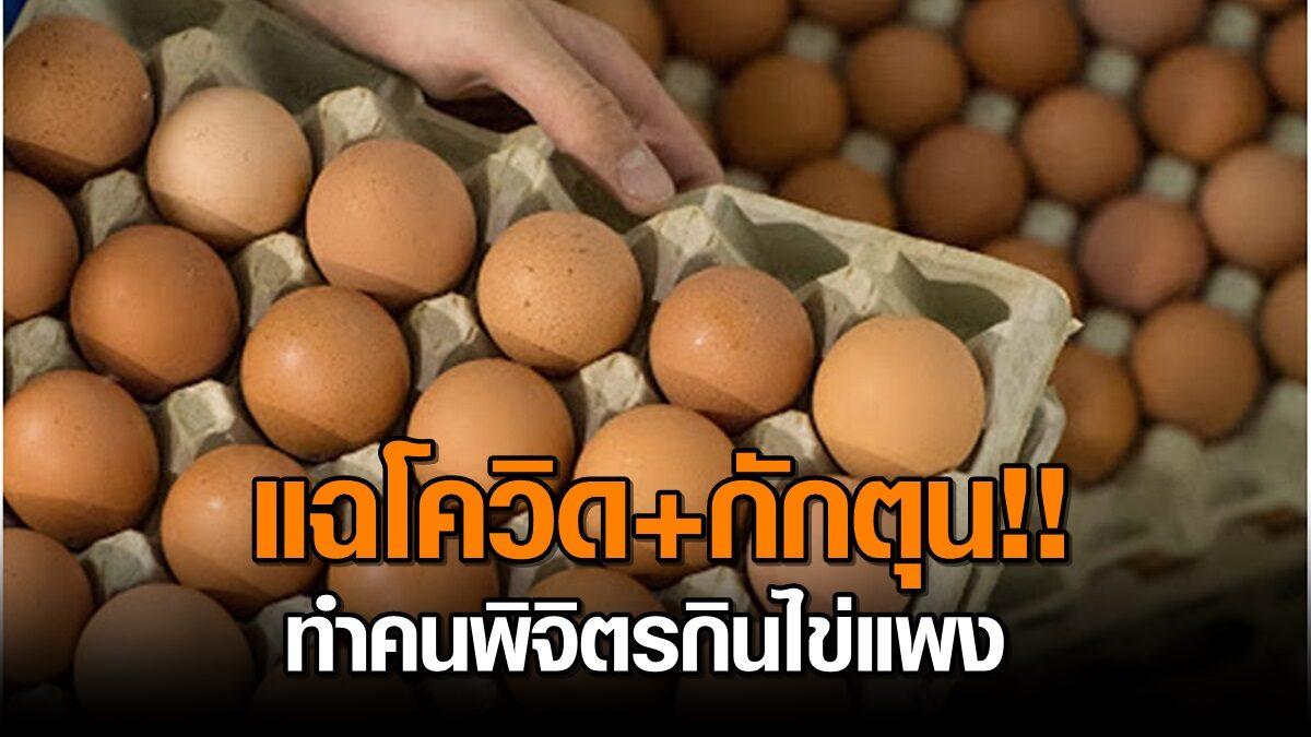 ช่วงนี้ไข่ไก่แพง เจ้าของฟาร์มเผยโควิดระบาด นำเข้าพันธุ์ไก่ยาก แฉมีกักตุน ฉวยโอกาสขึ้นราคา