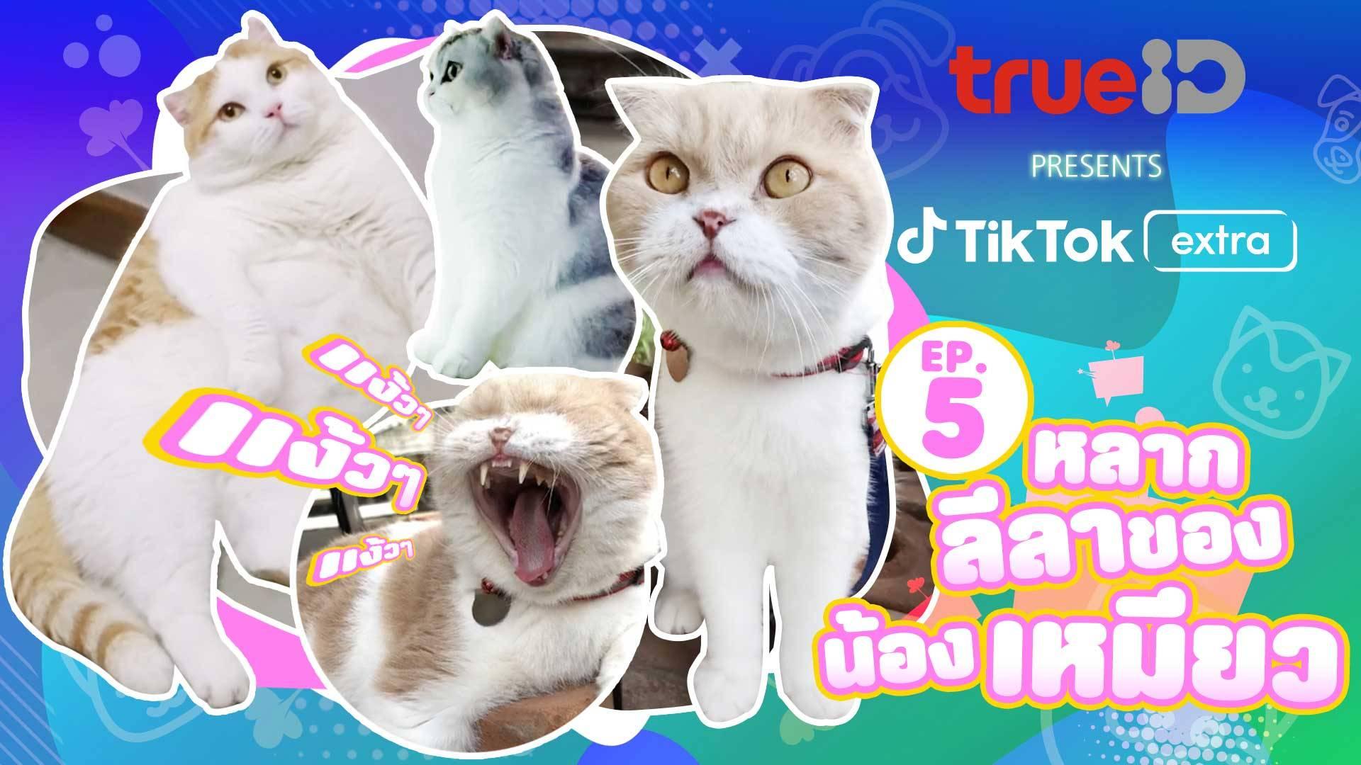 TrueID presents TikTok Extra : Pets Ep5 รวมมิตรสัตว์เลี้ยง สุดน่ารักจาก TikTok