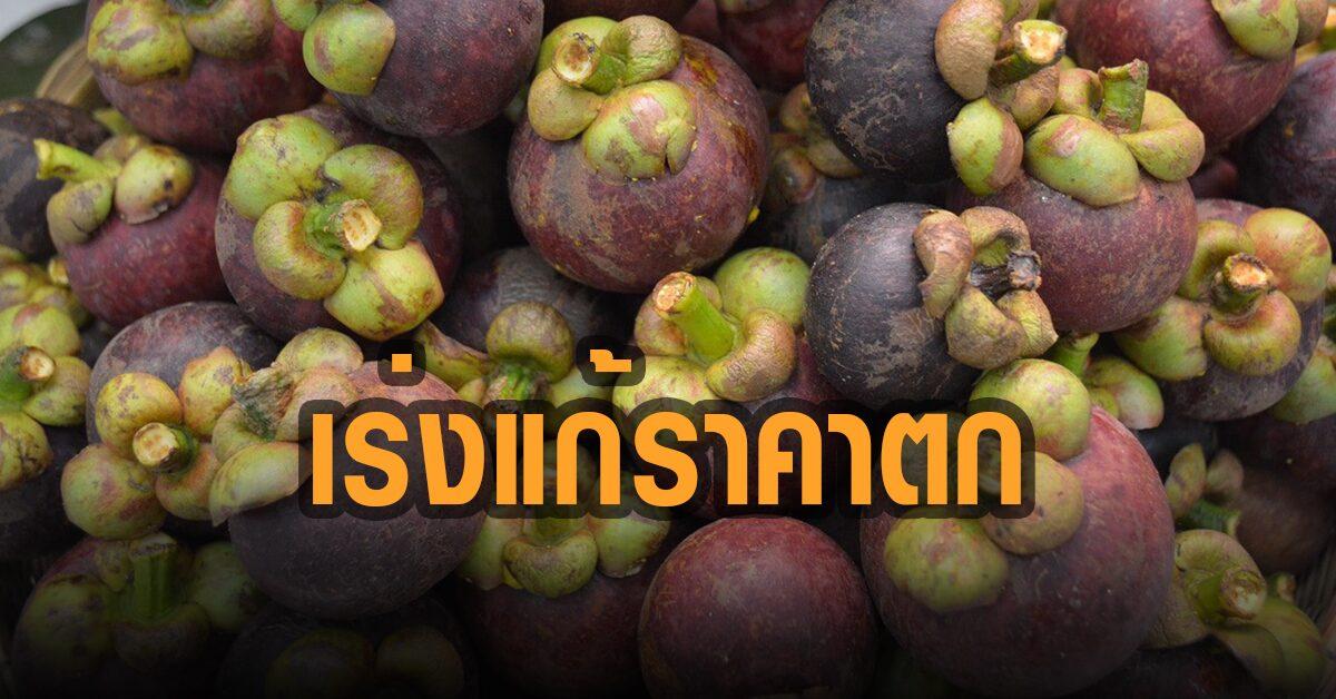 รัฐบาลเร่งแก้ปัญหามังคุดราคาตก พาณิชย์ช่วยค่าส่งผลไม้ฟรีผ่านไปรษณีย์ไทย
