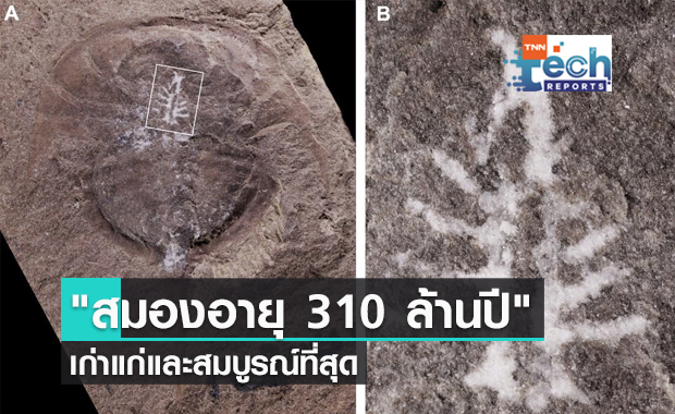 """นักวิจัยค้นพบ """"สมองอายุ 310 ล้านปี"""" เก่าแก่และสมบูรณ์ที่สุด"""