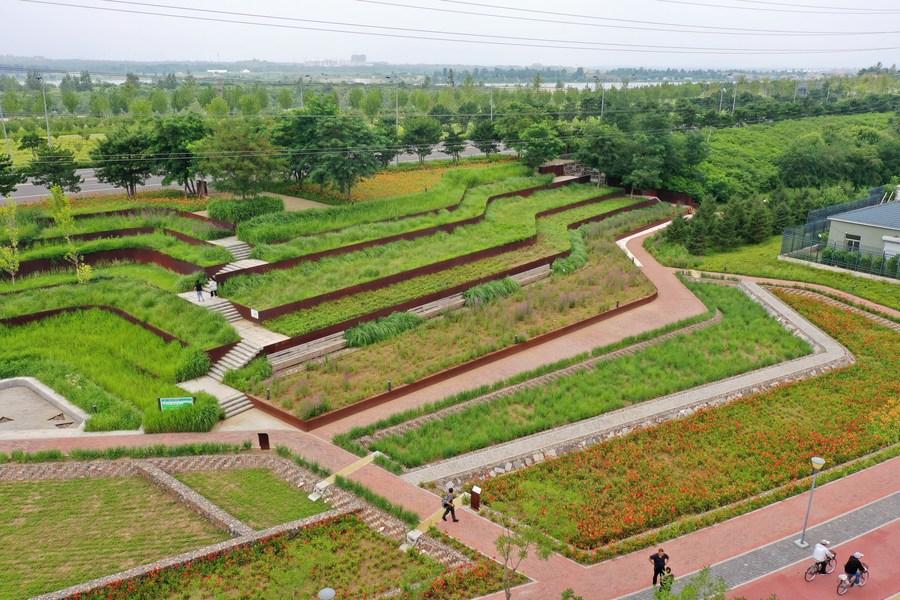 'เชียนอัน' ต้นแบบ 'เมืองฟองน้ำ' ในภาคเหนือของจีน
