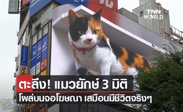โซเชียลตะลึง! แมวยักษ์ 3 มิติ โลดแล่นบนจอโฆษณา ย่านชินจูกุ