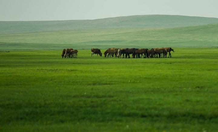 จีนทุ่มงบประมาณ 'ฟื้นฟูทุ่งหญ้า' ในมองโกเลียใน