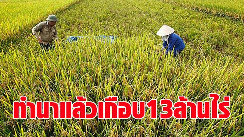 ทั่วประเทศปลูกข้าวแล้ว 12.72 ล้านไร่ - กรมชลฯ วอนเกษตรกรงดทำนาปรัง ชี้ปริมาณน้ำต้นทุนมีจำกัด
