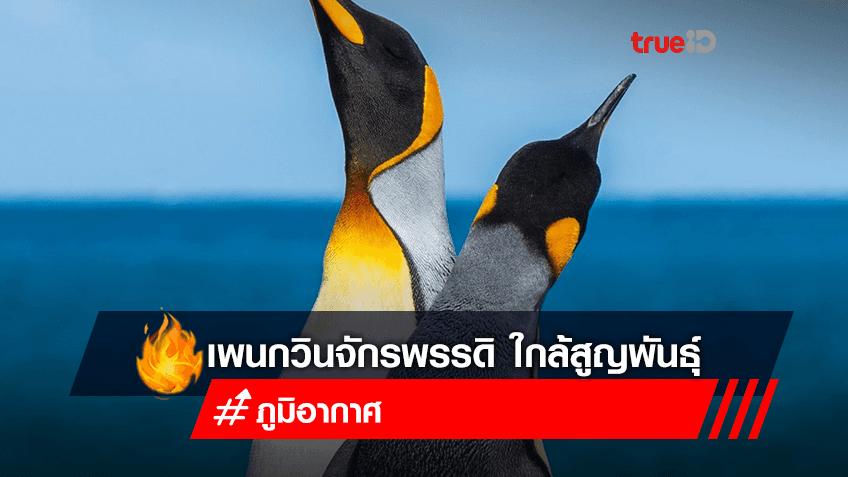 สภาวะอากาศเปลี่ยนแปลง อาจทำให้เพนกวินจักรพรรดิถูกขึ้นบัญชีใกล้สูญพันธุ์