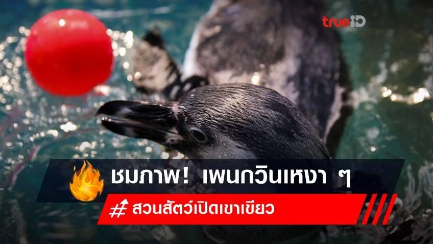 คนก็เบื่อ เพนกวินก็เหงา จากล็อกดาวน์ไทย
