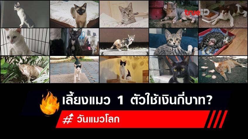 8 สิงหาคม วันแมวโลก : เลี้ยงแมว 1 ตัวใช้เงินกี่บาท? ไม่พร้อมไม่เลี้ยงกันนะ