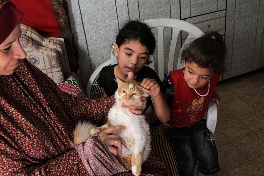 ผู้ลี้ภัยกาซาพลิก 'บ้าน' สู่ 'จุดพักพิง' ช่วยแมวจรจัดยากไร้