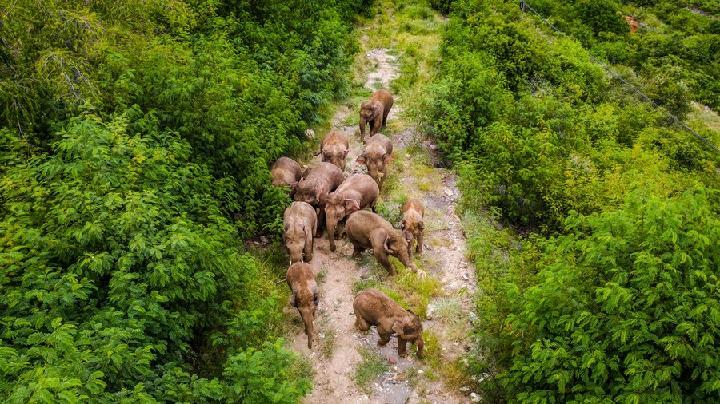 จีนออกสารพัดมาตรการหนุนคุ้มครอง 'ช้างเอเชีย'