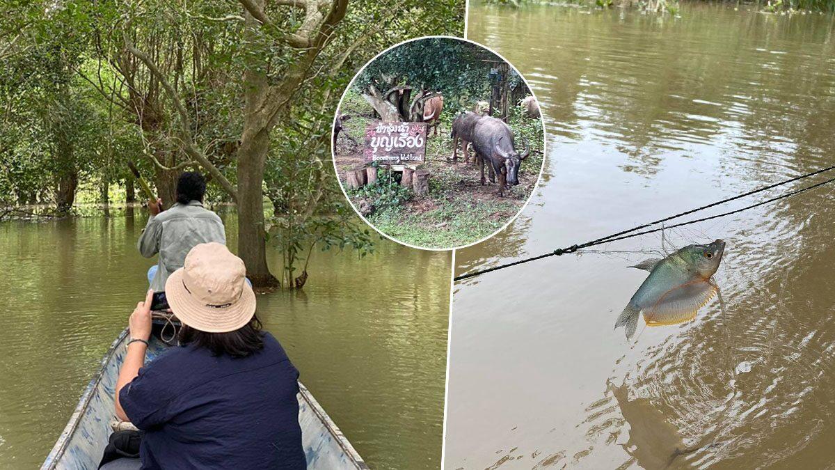 สำรวจ 'ป่าชุมชนบ้านบุญเรือง' น้ำไม่หลากมา 2 ปี เหตุเขื่อนจีนกั้นน้ำโขง