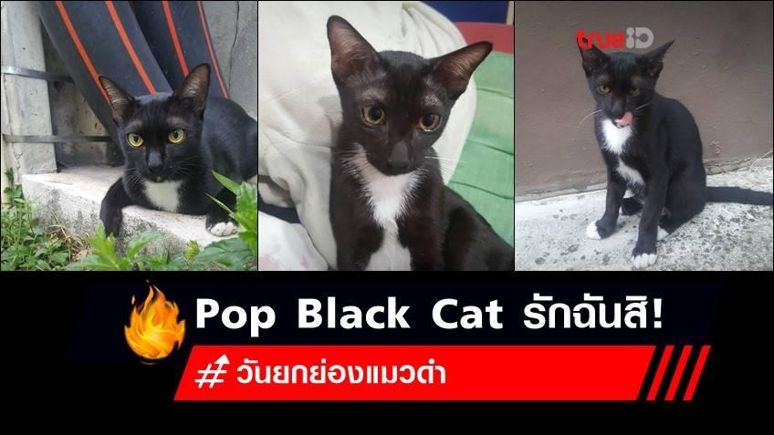 17 สิงหาคม วันยกย่องแมวดำ : Pop Black Cat น่ารักไม่แพ้แมวสีแน่นอน