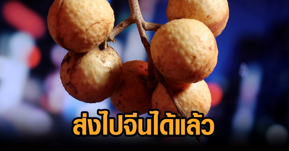 จีนปลดล็อกไฟเขียว 56 บริษัทไทย ส่งออกลำไยไปจีนแล้ว ตั้งแต่ 17 ส.ค.