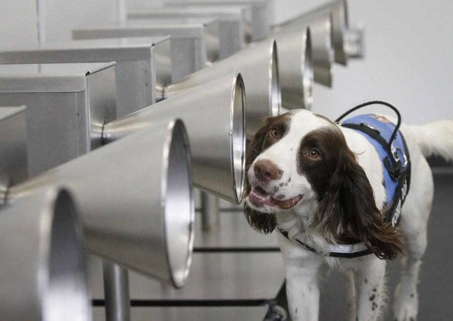 แคนาดาฝึก 'สุนัขดมกลิ่น' ตรวจจับโควิด-19