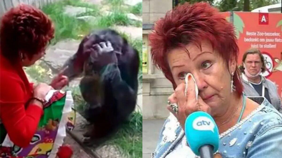 สาวสุดช้ำ โดนสวนสัตว์กีดกัน 'ความรัก' ห้ามเจอ ชิมแปนซีหนุ่ม หยุดสัมพันธ์ 4 ปี