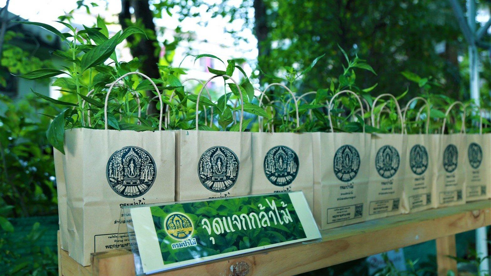 กรมป่าไม้แจกกล้า'ฟ้าทะลายโจร'สมุนไพรไทยยับยั้งการแพร่เชื้อโควิด-19