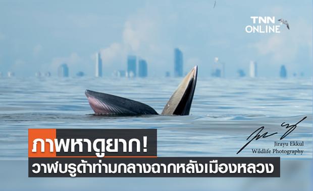 """ภาพหาดูยาก! """"วาฬบรูด้า"""" โผล่อ้าปาก ชายฝั่งทะเลบางขุนเทียน"""