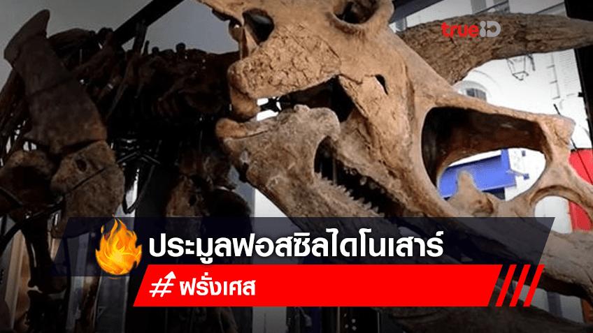 จะมีการจัดประมูลฟอสซิลไดโนเสาร์พันธุ์เซราทอปส์ที่ใหญ่ที่สุด ที่กรุงปารีส
