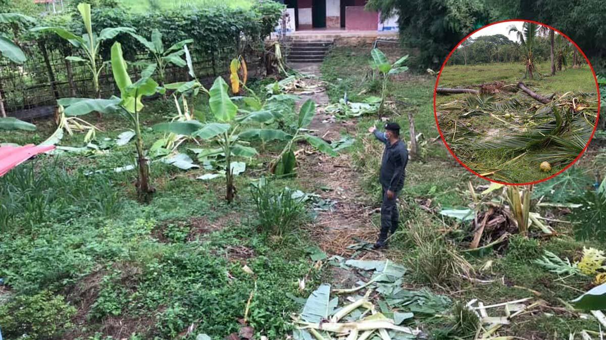 ช้างป่าบุก ค่ายตชด. รื้อต้นมะพร้าว-ต้นกล้วยพังราบกว่า 50 ต้น