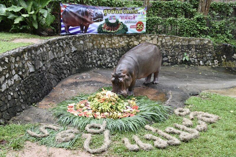 """ฉลองวันเกิด 56 ปี แม่มะลิ สวนสัตว์เขาเขียว มอบเค้กก้อนยักษ์ ประเดิมโครงการ """"เราจะดูแล จนแก่เฒ่า ไปด้วยกัน"""""""