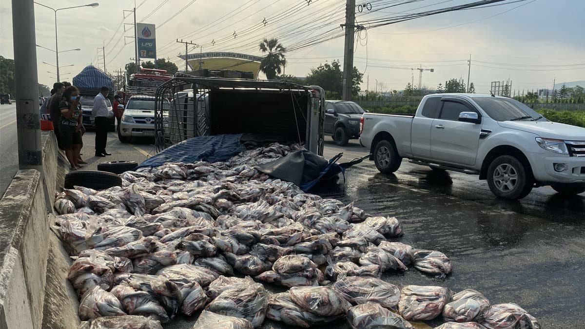รถขนปลา 4 ตันยางแตกเสียหลักพลิกคว่ำ ทำปลากระเด็นเกลื่อนถนน