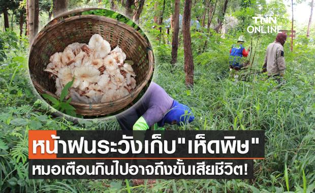 ชาวบ้านแห่เก็บเห็ดป่า หมอเตือนระวังเปิบเห็ดพิษเสี่ยงถึงตายได้!