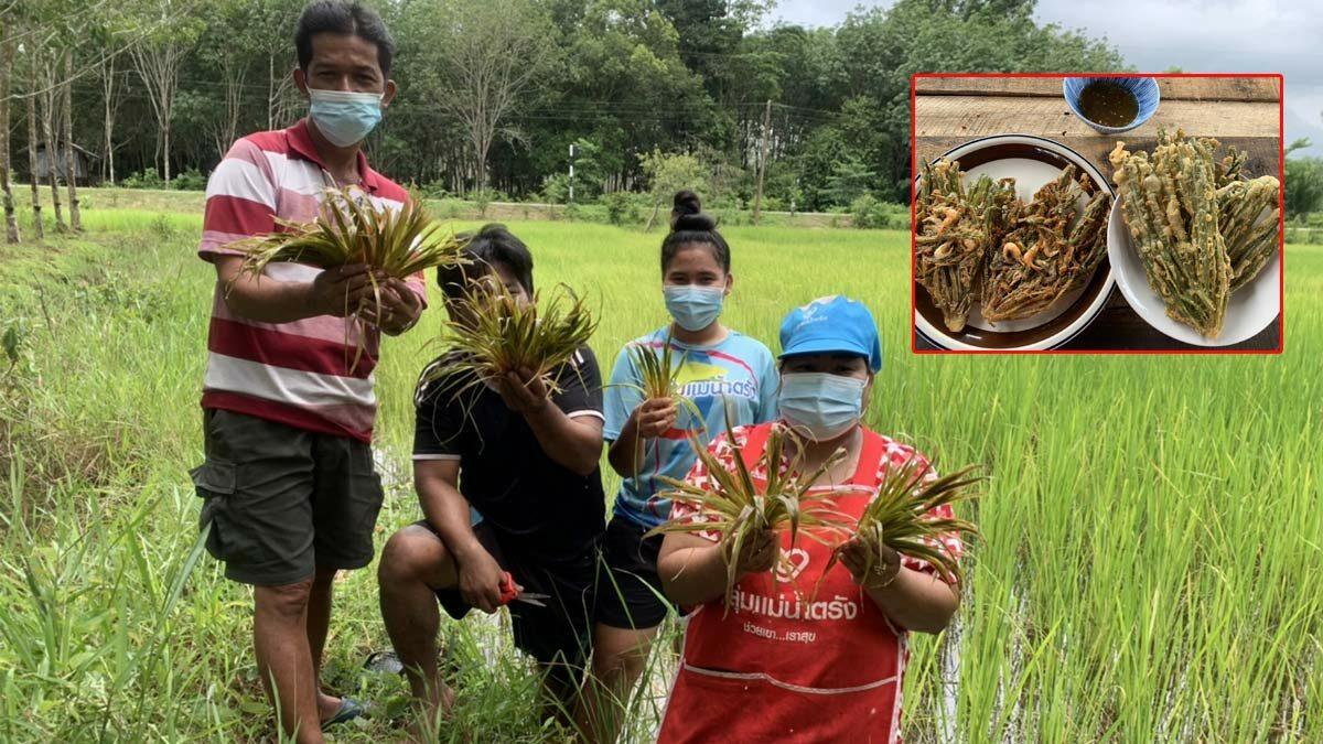 แม่ค้าเอาหญ้ามารวยทอดขาย รายได้ดีวันละหลายพัน เชื่อรักษาโรคได้