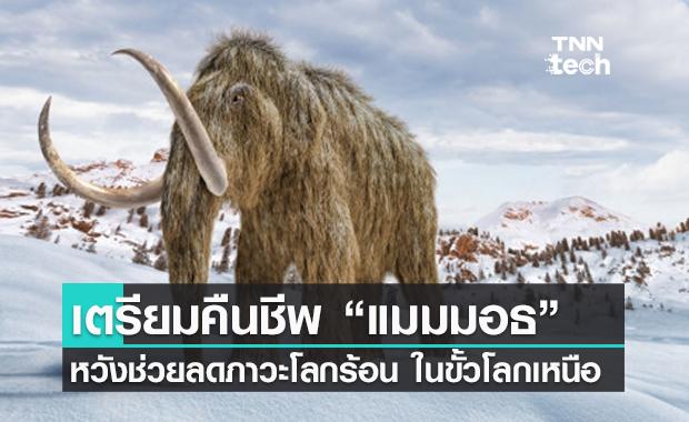 """นักวิทยาศาสตร์ เตรียมคืนชีพ """"แมมมอธ"""" หวังช่วยลดโลกร้อนในแถบขั้วโลกเหนือ"""
