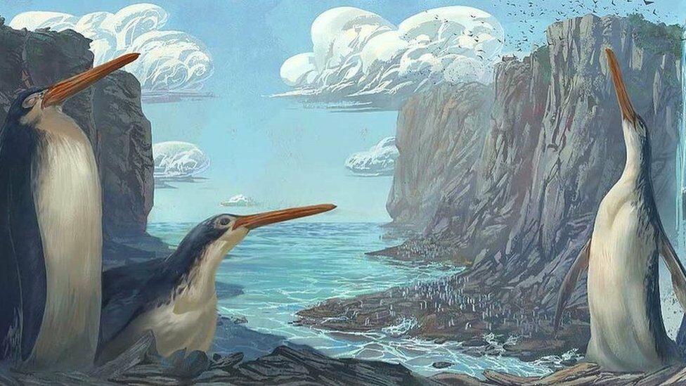 ผลวิเคราะห์ชี้ฟอสซิลที่กลุ่มนักสำรวจรุ่นเยาว์ค้นพบ เป็นเพนกวินยักษ์อายุกว่า 30 ล้านปี
