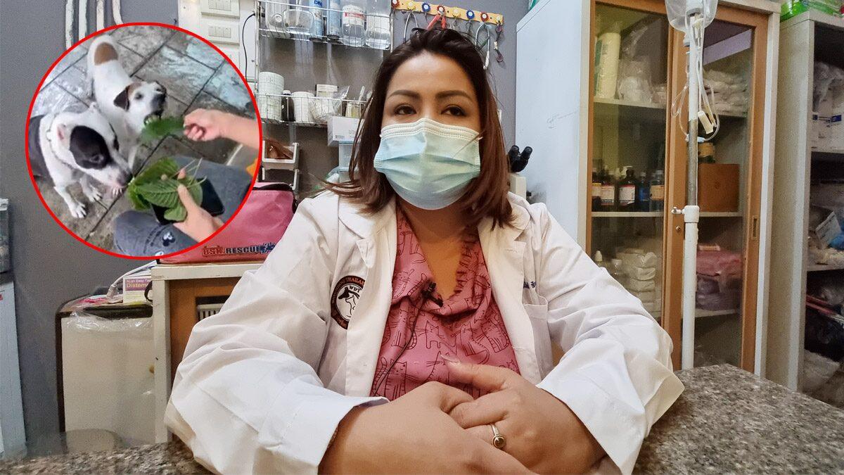 อย่าทำ! สัตว์แพทย์เตือนให้หมากินใบกระท่อม เสี่ยงตับวาย ผิด พรบ.ทารุณกรรมสัตว์