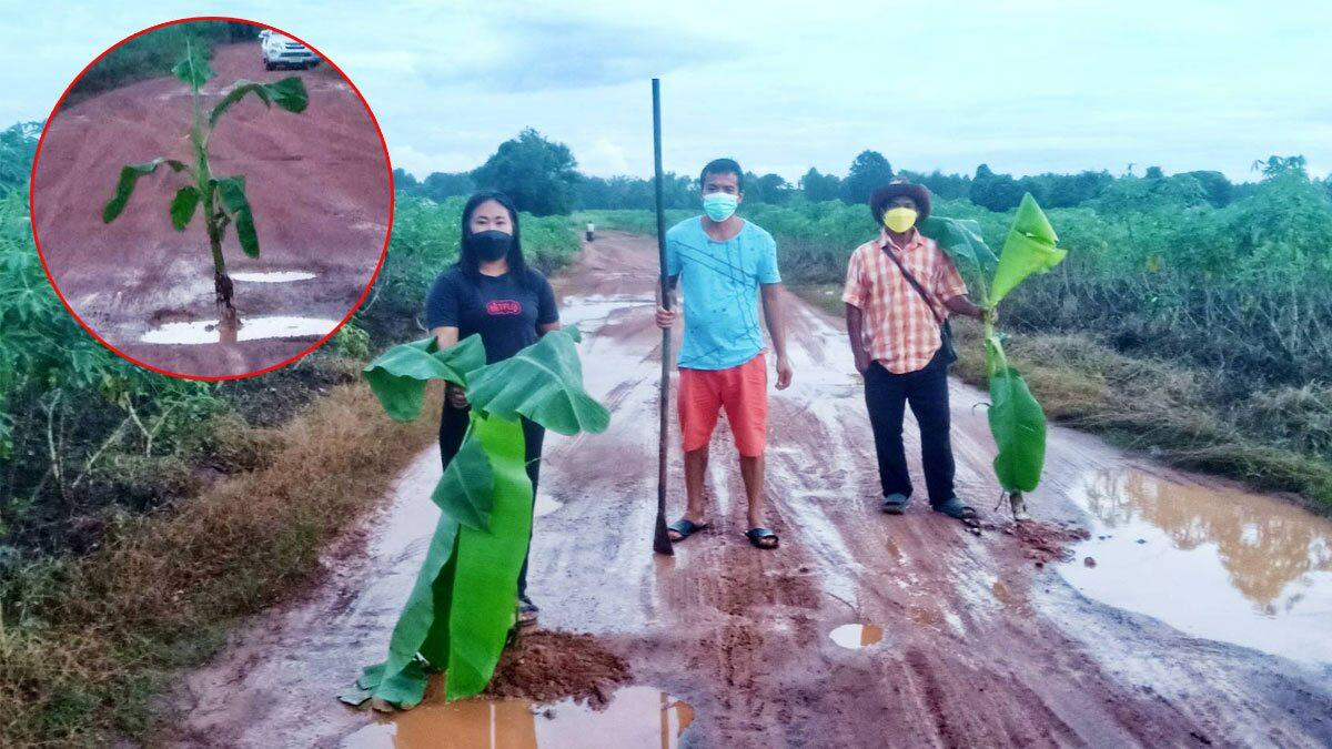 ระทม ถนนพัง ประชดเอาต้นกล้วยปลูก หวังหน่วยงาน มาซ่อมด่วน