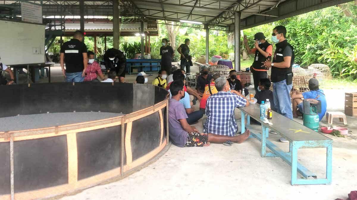 บุกทลายบ่อนไก่ชน กลางเกาะสมุย นักพนันกว่าครึ่งร้อยเล่นกันไม่สนโควิด ไล่จับได้ 16 คน