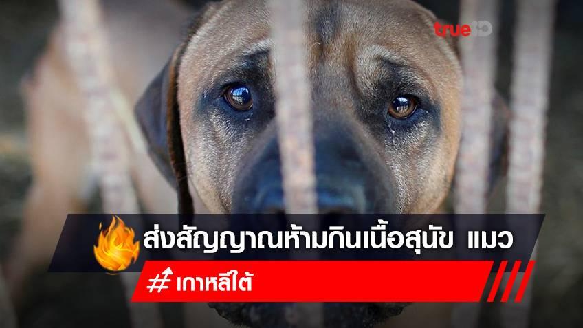 ปธน.เกาหลีใต้ โยนหินถามทาง ออกกฎหมายห้ามกินเนื้อสุนัข เนื้อแมว ท่ามกลางเสียงถกเถียงในประเทศ