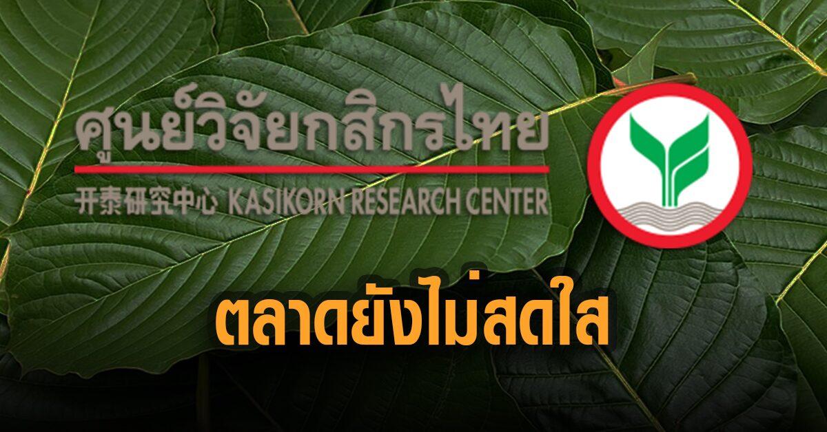 ศูนย์วิจัยกสิกรไทย มองตลาดพืชกระท่อมยังไม่สดใสนัก แนะปลูกแซมกับพืชตัวอื่น