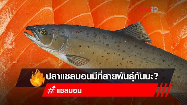 """ปลาแซลมอน มีกี่สายพันธุ์? """"ปลาแซลมอน"""" สายพันธุ์ไหนที่กินได้!"""