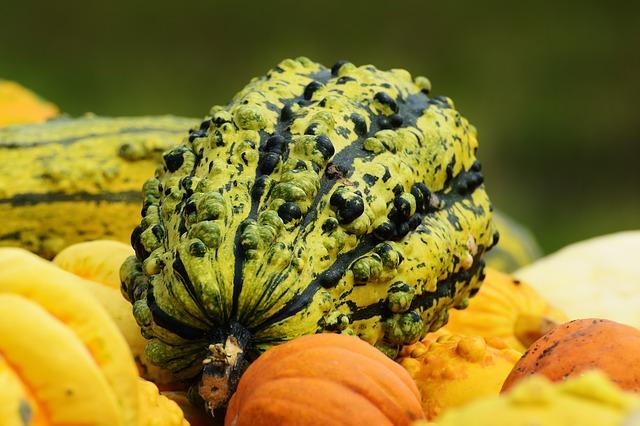 pumpkins-1642231_640