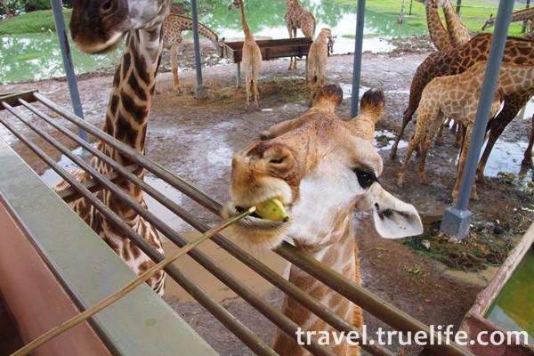 เที่ยวสวนสัตว์ซาฟารีเวิล์ด (Safari World) วันเด็ก เอาใจเด็กๆ
