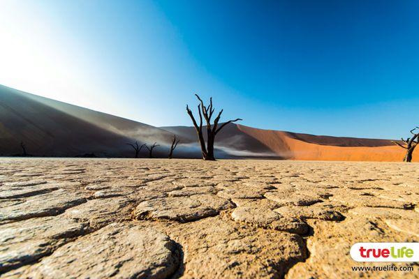 Namib Desert (3)
