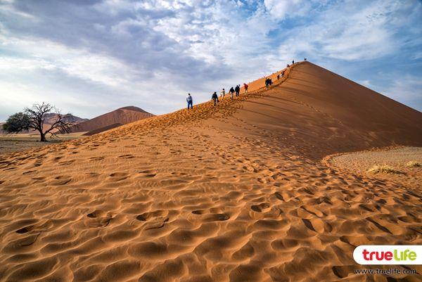 Namib Desert (6)