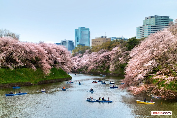 Sakura 3_Tokyo