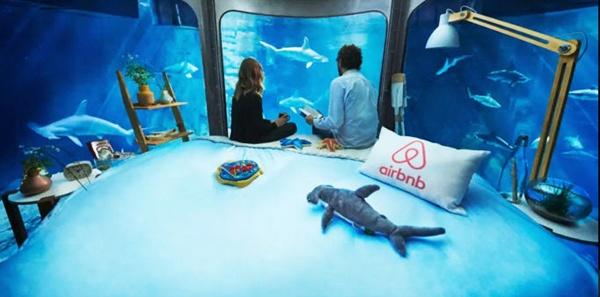 The Shark Aquarium 03