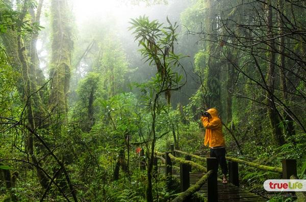 เคล็ดลับเตรียมตัวให้พร้อม เที่ยวป่าหน้าฝน ให้สนุกและปลอดภัย 01