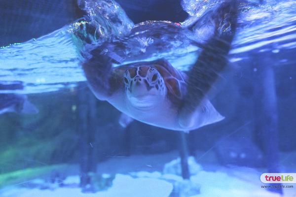 SeaLife Bangkok Ocean World
