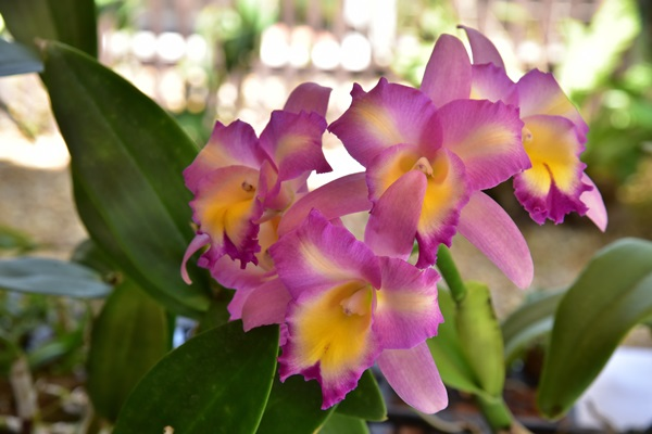 the-blooms-orchid-park-1