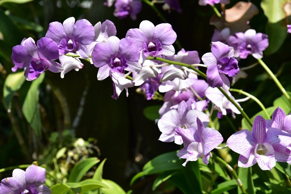 the-blooms-orchid-park-2